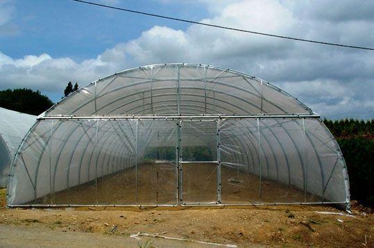 Invernadero túnel de techo curvo